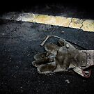 RoadKill by Ant Vaughan