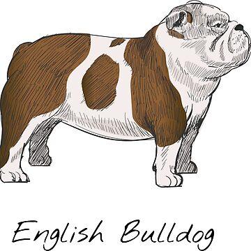 English Bulldog Vintage Style Drawing by efomylod