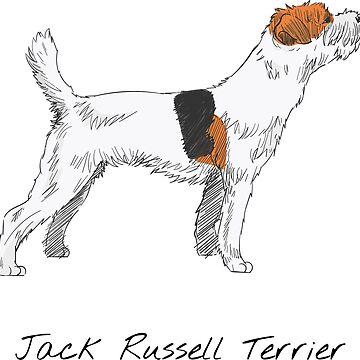 Jack Russell Terrier Vintage Style Drawing by efomylod