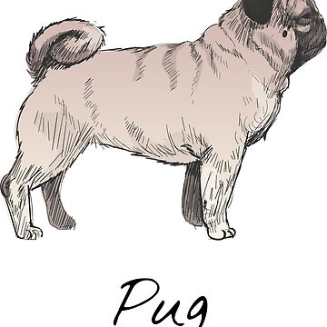 Pug Vintage Style Drawing by efomylod