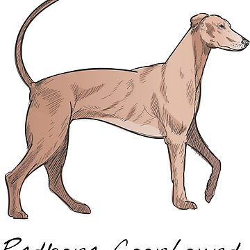 Redbone Coonhound Vintage Style Drawing by efomylod