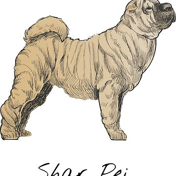 Shar Pei Vintage Style Drawing by efomylod