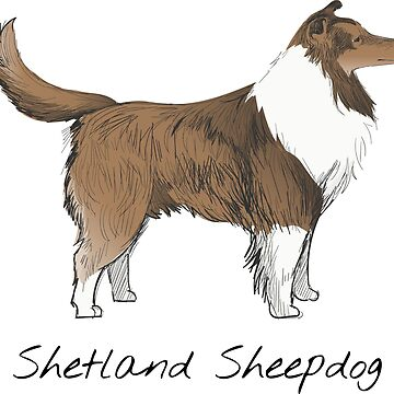 Shetland Sheepdog Vintage Style Drawing by efomylod
