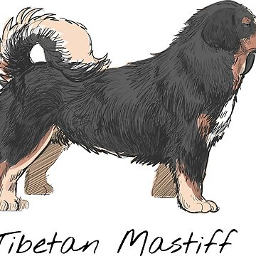 Tibetan Mastiff Vintage Style Drawing by efomylod