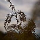 Jerrabomberra Wetlands (Canberra/ACT/Australia) (2) by Wolf Sverak