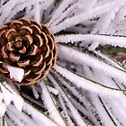 pine cone by punchdrunklove