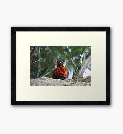 Bird Of Vibrance Framed Print