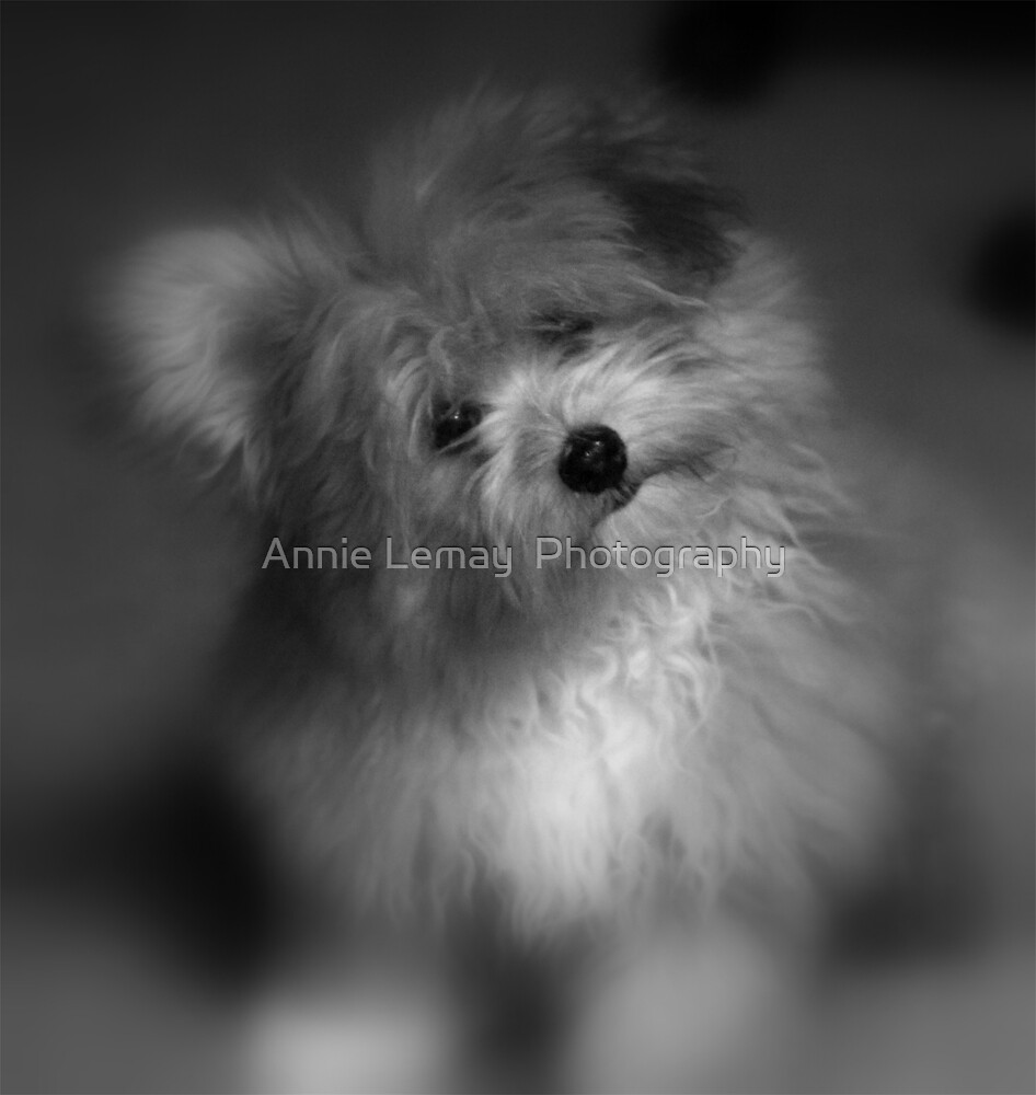 I Love You by Annie Lemay  Photography