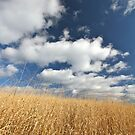 Golden Autumn Field under Blue Sky and Couds by Ryan McGurl
