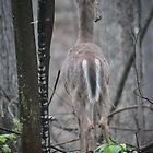 Deer Looks in Ravine by Thomas Murphy
