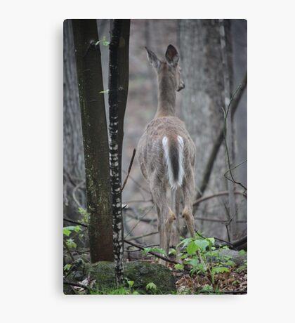 Deer Looks in Ravine Canvas Print