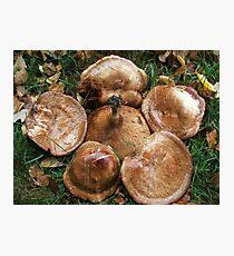 Fungi Flower Photographic Print