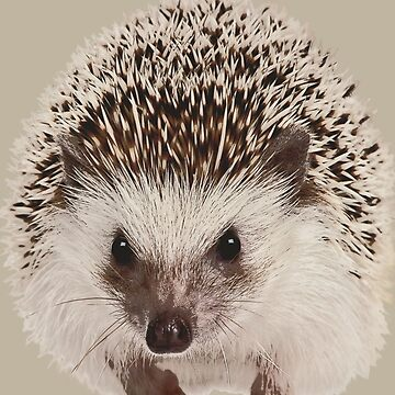 Pygmy Hedgehog Phone Case by markstones