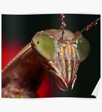 2009 Mantis - #5 Poster