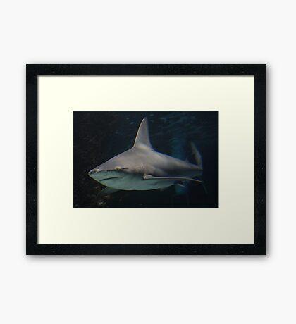 The Swim Framed Print