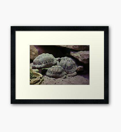 The Shell Game Framed Print