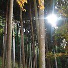 Trees of Ginkaku-ji by J J  Everson