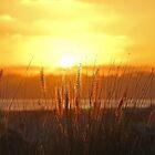Beach Grass Sunset by Chet  King
