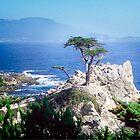 Lone Cypress by Yukondick
