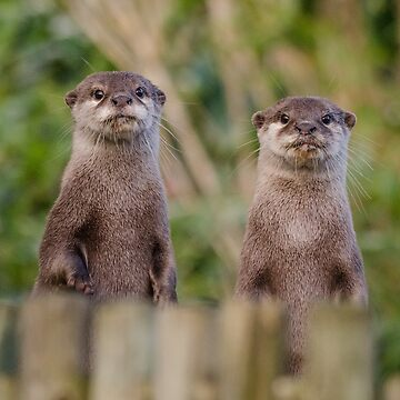 Otter pair by photosbygemmad