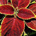 Foliage Series - 3 by ctheworld