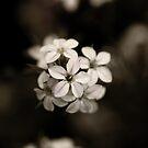 bloom by Anthony Mancuso