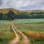 tallgrass prairie hay bales by R Christopher  Vest