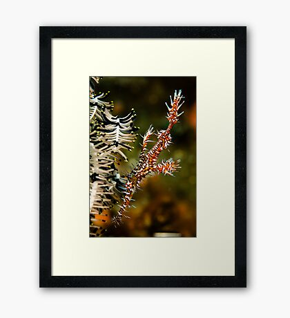 Ornate Ghost Pipe Framed Print