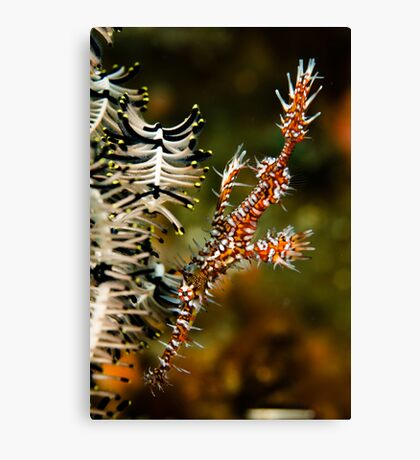 Ornate Ghost Pipe Canvas Print