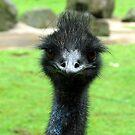 EMU BIRD ANIMAL  by SofiaYoushi
