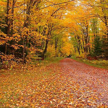 Yellow Walkway by JohnDSmith