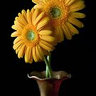 Two Gerbera by bnilesh