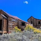 Bodie Late Summer Bloom by photosbyflood