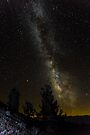 Bristle Cone Pines and the Milky Way by photosbyflood