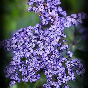 Purple Flowers by Photograph2u