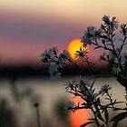 Evening Flower by JC-Photography