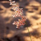 Finke Grass  by Paul Moore