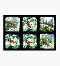 Happy Bugs Polyptych - TTV Photographic Print