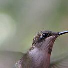 Black-Chinned Hummingbird by DottieDees