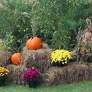 Autumn Display  by ArkansasLisa