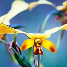 Yellow Granite Donkey Orchid by Paul Amyes