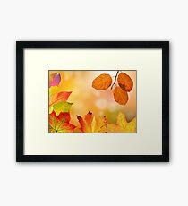 Autumn leaves, leaves, autumn, idea Framed Print