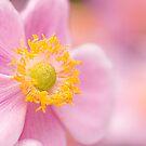 Pink Anemone by Beth Mason