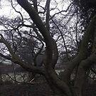 Twisted Tree Branches By Miss K L Slomczynski  by KABFA