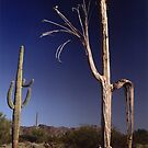 Desert ribs by yvesrossetti