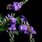 Two Honeybees by Ostar-Digital