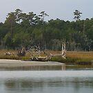 Pawley's Island - Tree by Inlet by Jon Julian