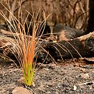 Life After Fire 05 by Werner Padarin