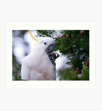 Another Sulphur Crested Cockatoo Art Print