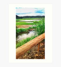 Rice Fields Art Print